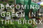 Roundtable Discussion: Becoming Green in the Bronx